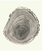 Tree Rings Photo